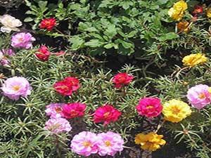 Popular Flowers for Your Garden